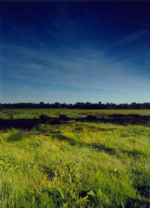 Gijzenrooi nabij Kanunnikensven